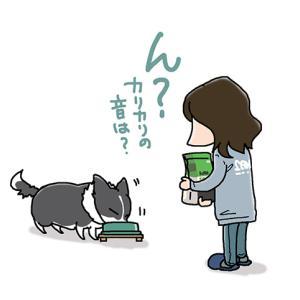 カリカリ音は?・10月21日のピピぞう/【犬マンガ】