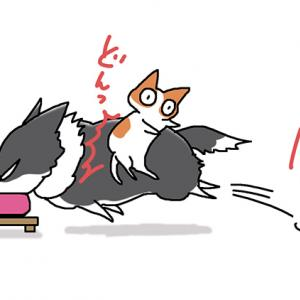 ダイブする犬・10月22日のピピぞう/【犬マンガ】