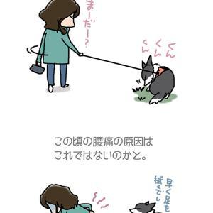 腰痛の地味な原因・11月26日の飼い主/【犬マンガ】