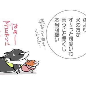 孫より犬・2月25日の飼い主/【犬マンガ】