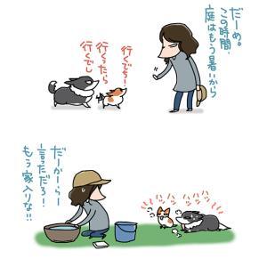 暑さを学習しないヤツら・4月30日のピピちく/【犬マンガ】