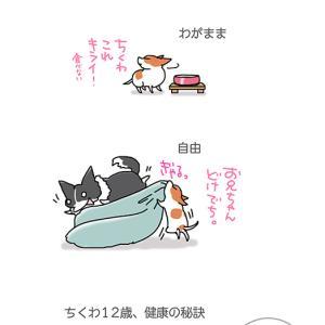 これこそ健康の秘訣・5月12日のちくわ/【犬マンガ】
