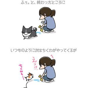 汚れてない足を洗う・5月20日のちくわ/【犬マンガ】