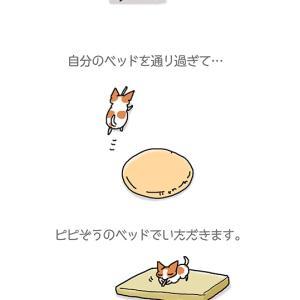 ベッドはランチョンマット・6月1日のちくわ/【犬マンガ】