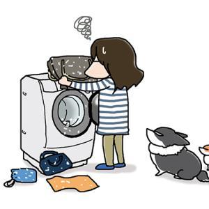 チリ紙in洗濯機・6月2日の飼い主/【犬マンガ】