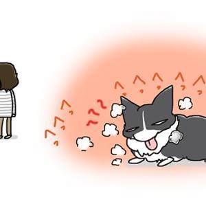 日本が暑いのは・6月9日のピピぞう/【犬マンガ】
