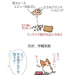 フィラリア半分・6月10日のちくわ/【犬マンガ】