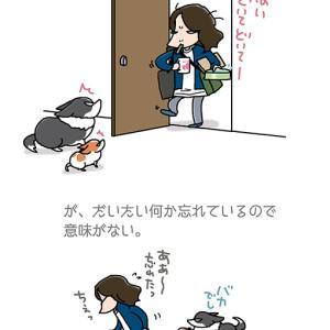 結局上り下り・6月11日の飼い主/【犬マンガ】