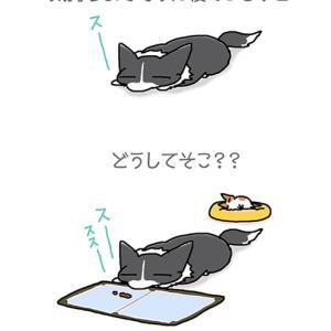謎の寝場所・6月17日のピピぞう/【犬マンガ】