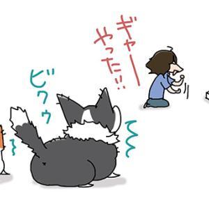 飼い主がうるさい・7月26日の飼い主/【犬マンガ】