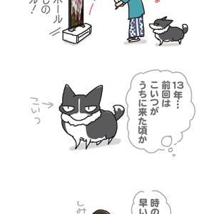 しみじみオリンピック・7月27日の飼い主/【犬マンガ】