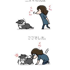 ニオイの元は・9月23日のピピぞう/【犬マンガ】