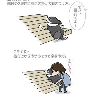 階段の2段目・9月24日のピピぞう/【犬マンガ】