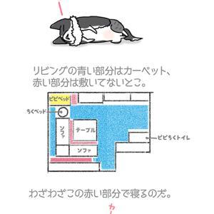どうしても床・9月27日のピピぞう/【犬マンガ】