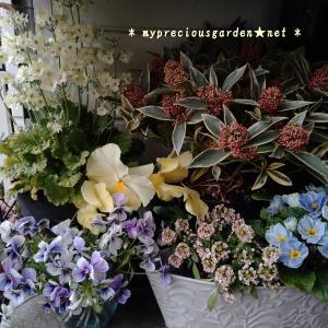 【ブログ】花香る冬の玄関。通り過ぎるだけで左右から香りのシャワーが