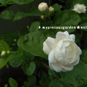 8月の花【前編】