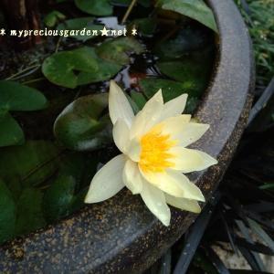 今年アップしそびれた植物たち~「秋の植物編1」~