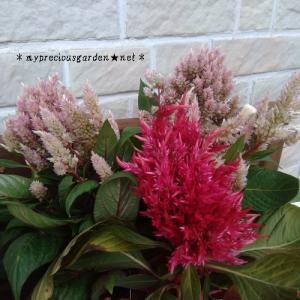 栽培中の初秋の植物を使った秋のお彼岸お供え花考察