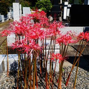 お花が供えられていないお墓が多い