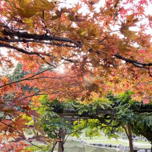 秋のジャパニーズガーデン