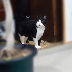 我が家の長寿猫「ロク」は18歳(人間換算88歳)