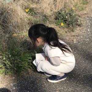 セロリの葉の使い道
