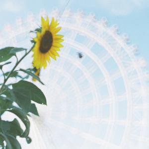 フィルム写真は思い出を淡く写し撮る