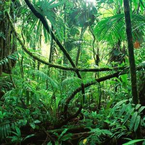 ダリー語で笑い話 「ジャングル」