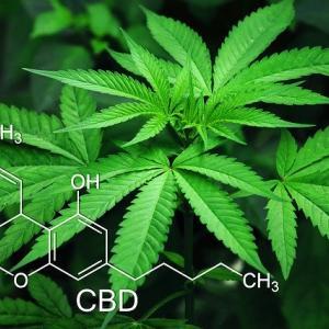 大麻(マリファナ)の効果や症状を解説。そもそも大麻とは?