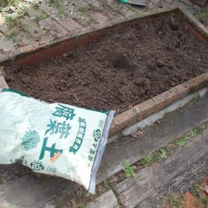 冬野菜の植付とスポンジ貼り