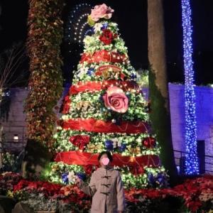 フラワークリスマスツリー(ひらかたパーク)