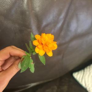 しなびた、しおれた一輪の花が、私に教えてくれたこと。