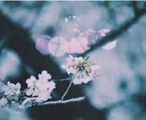 乾いてガサガサの私の心を干天の慈雨のごとく潤した詩