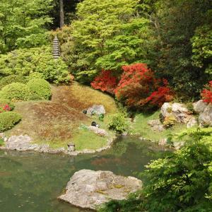 庭園52 青蓮院門跡庭園 小堀遠州「霧島の庭」と「相阿弥の庭」
