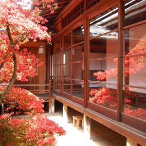 庭園59 妙心寺塔頭大心院「阿吽庭」「切石の庭」と霧島ツツジの古木