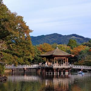 【紅葉偵察】正倉院展で奈良公園へ【吉城園】
