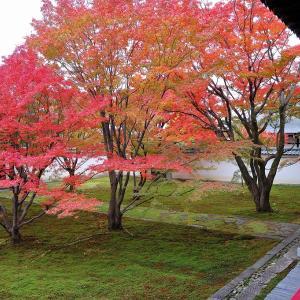 【紅葉】妙覚寺庭園「法姿園」【京都】