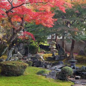 【東福寺塔頭】盛光院庭園と新善光寺庭園の紅葉【泉湧寺塔頭】