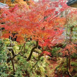【紅葉】ノートルダム女学院『和中庵』 和洋折衷の建物と紅葉の庭園【特別公開】