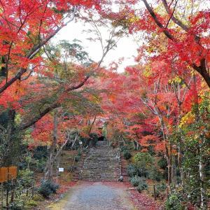 【特別公開】浄住寺の紅葉の参道【まだ間に合う】