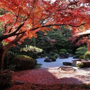 【紅葉】随心院と御香宮神社の庭園【穴場】