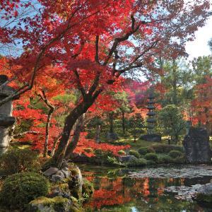 【非密の紅葉狩り3】泉湧寺と大寧軒【GoToアローン】