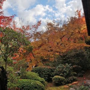 【非密の紅葉狩り5】善法律寺の特別公開と花手水【GoToアローン】