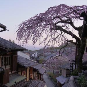 【桜】清水三年坂の枝垂れ桜と平野神社の魁桜【3/17散策記】