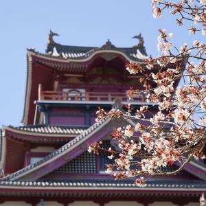 【桜】伏見・長建寺の糸桜と伏見桃山城【3/18散策記】