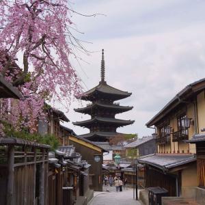 【桜】鴨川沿いと清水界隈の桜【3/22散策記】