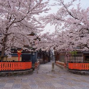 【桜】円山公園から哲学の道まで【3/30散策記】