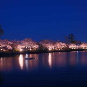 【桜】大原野神社の千眼桜と長岡天満宮桜ライトアップ【3/31散策記】