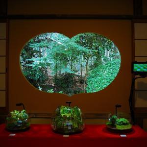 地蔵院竹の寺のモシュ印/コケ寺リウムに行って来ました!