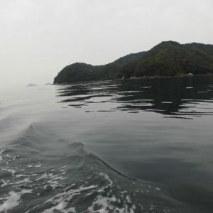 臼杵湾で鯛ラバ
